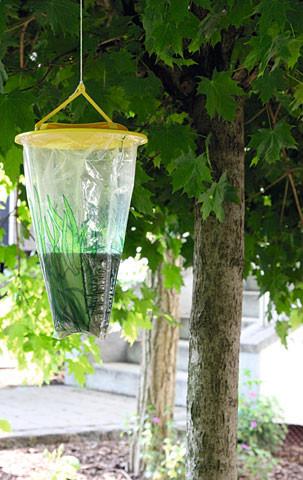 Wasp Cage Wespenfalle